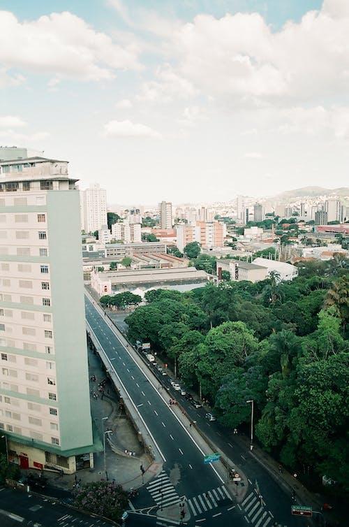 Green Trees Near City Buildings