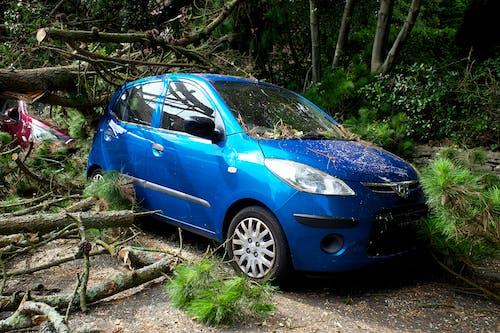 Blue Honda Car Parked Near Green Trees