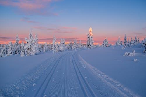 Безкоштовне стокове фото на тему «вічнозелений, гора, грудень»