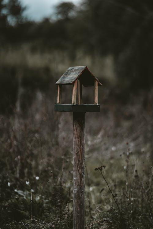 ダーク, フィールド, 屋外の無料の写真素材