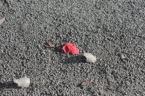 Small dry and red fallen leaves lying on rough surface with small stones in daylight