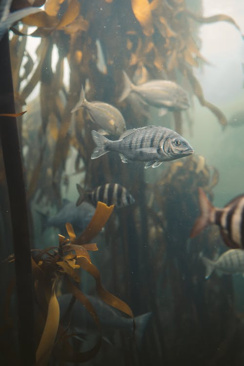 Black and White Fish in Fish Tank