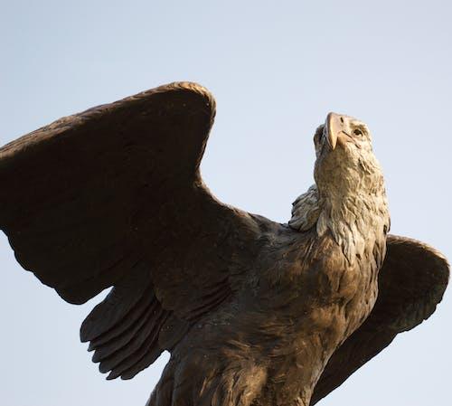 Fotobanka sbezplatnými fotkami na tému orliak bielohlavý, orol, socha, sochy