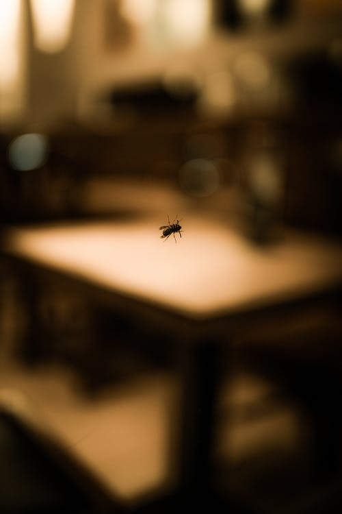 Free stock photo of bokeh, close up, insect