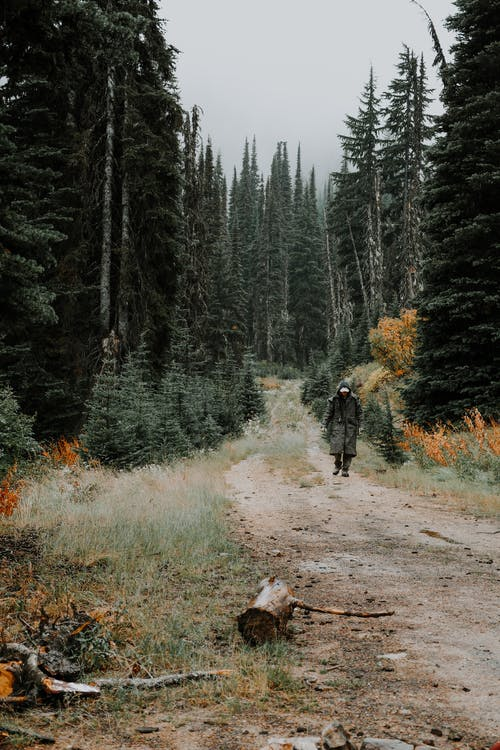 Anonymous tourist walking on pathway between coniferous forests