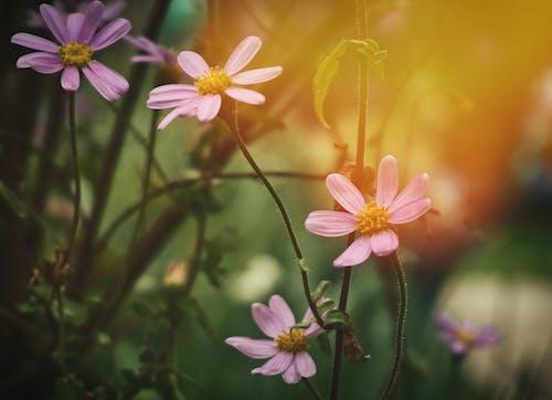 Kostnadsfri bild av blommor, ljus, ljusläckage, natur