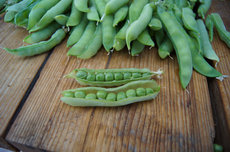 Free stock photo of fresh, fresh produce, fresh vegetables, green