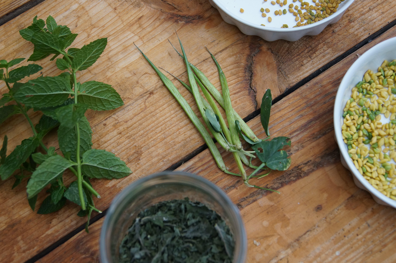 Free stock photo of alternative medicine, fresh produce, herbs, mint