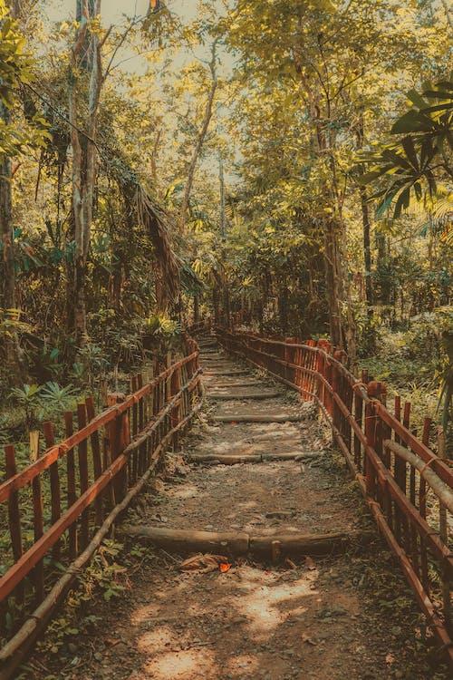 Gratis arkivbilde med årstid, blad, bro, falle