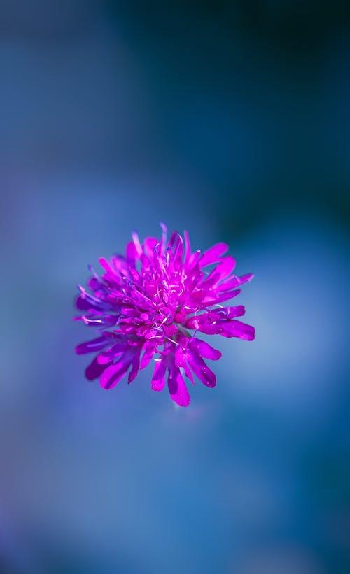 Immagine gratuita di fiori, fiori bellissimi, fiori che sbocciano, fotografia di fiori
