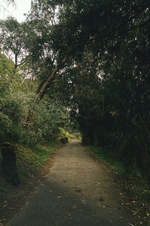 Photos gratuites de à contre-jour, arbre, aube, bois