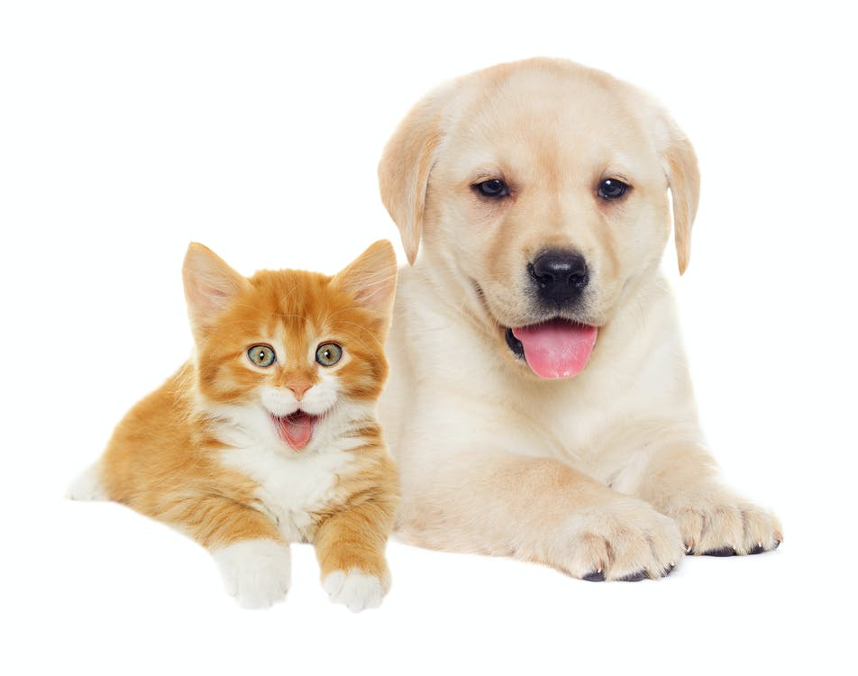 Free stock photo of cat and dog