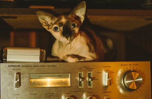 Безкоштовне стокове фото на тему «sfinx, аналоговий, всередині, дорослий»