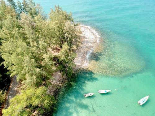 Photos gratuites de arbres, bateau de pêche, bateaux, bord de l'océan