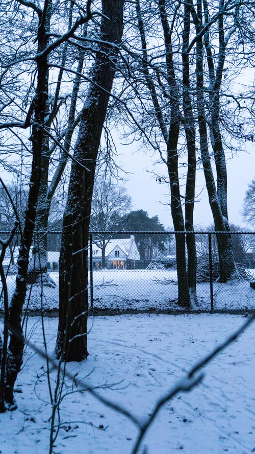 Free stock photo of farm house, forest, snow