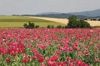 field, flowers, meadow