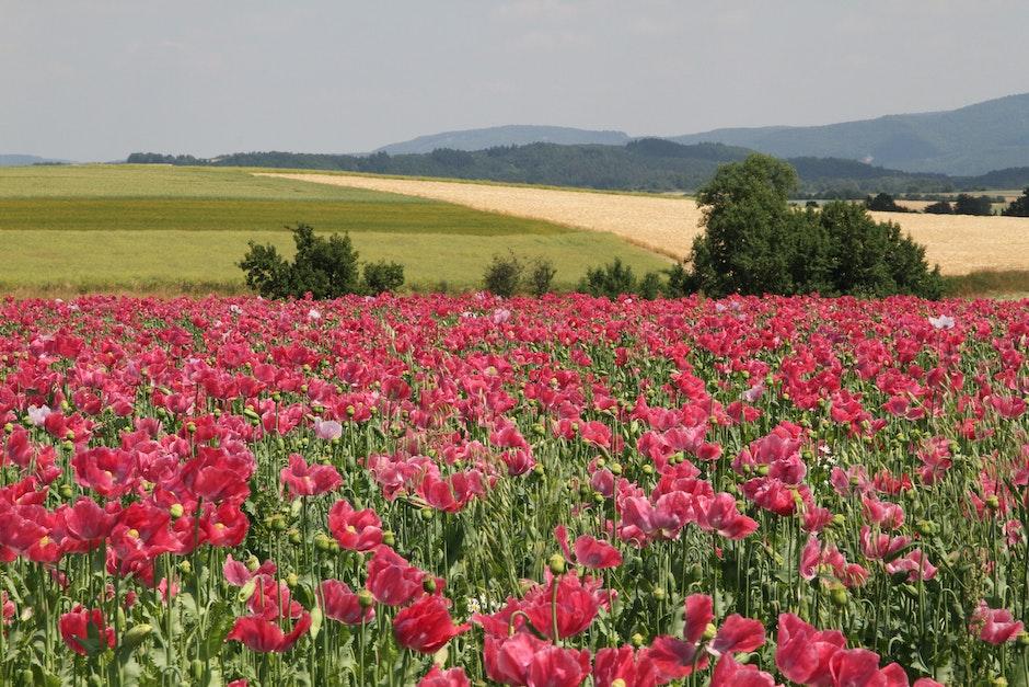 farmland, field, flowers