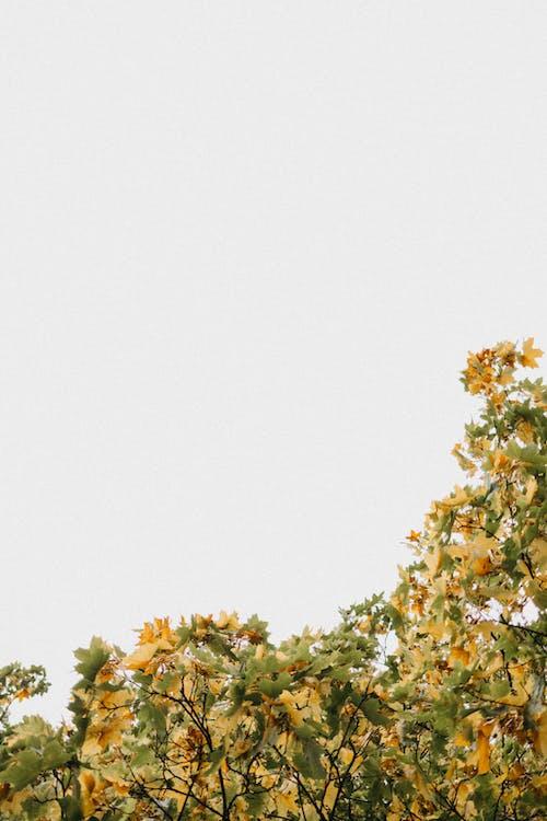 Imagine de stoc gratuită din anotimp, arbore, arta fundal, atmosfera de outono