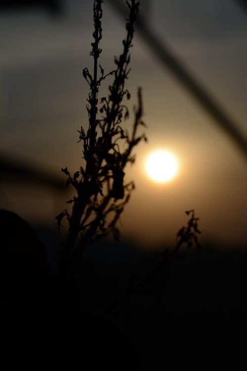 Free stock photo of golden sun, grains