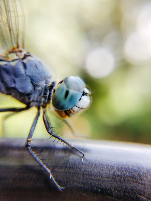 Small dragonfly standing on smooth surface in bright green nature on summer sunny day