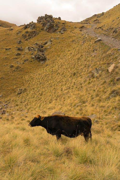 Immagine gratuita di agricoltura, altopiano, ambiente