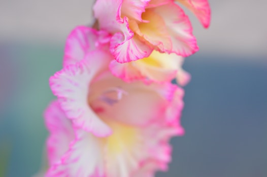 Free stock photo of nature, flowers, petals, blur