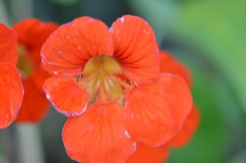 Ingyenes stockfotó narancs, narancssárga virágok, virágok témában