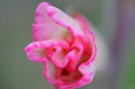 nature, petals, blur