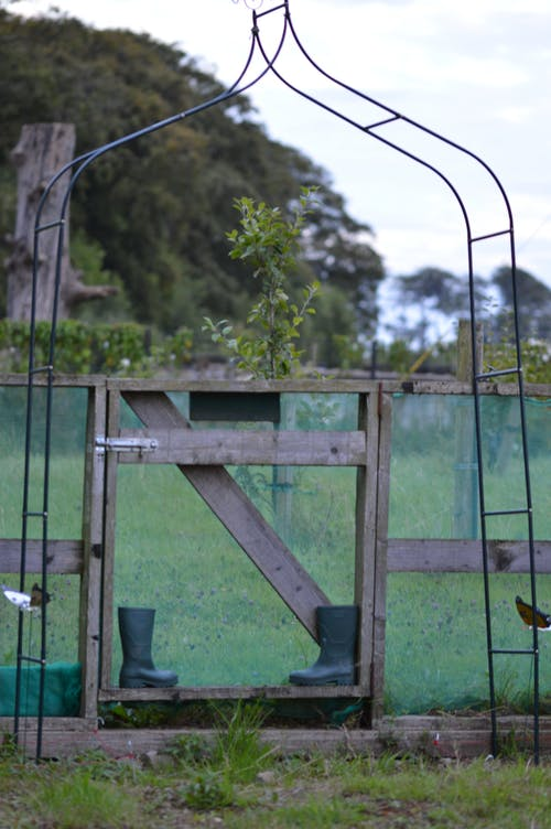 Free stock photo of allotment, gate, giy