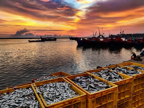 Free stock photo of Beautiful fishing harbour, boat ferry, catching fish, Evening fishing harbour