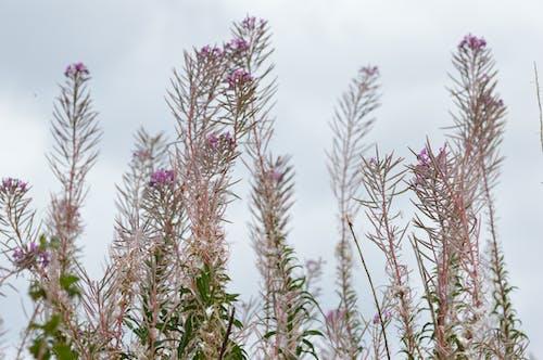 Free stock photo of flowers, purple, purple wildflowers