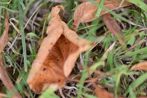 Free stock photo of fall leaf, macro photography