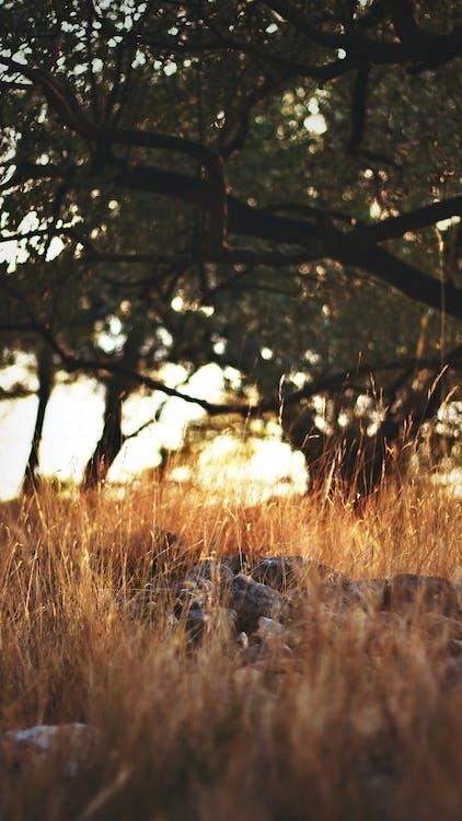drzewa, godzina, kamienie