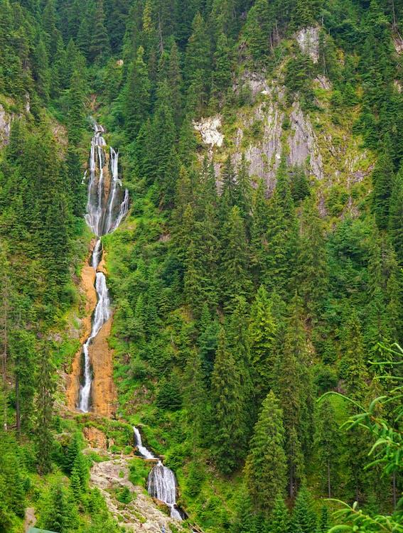 Green Pine Trees on Mountain