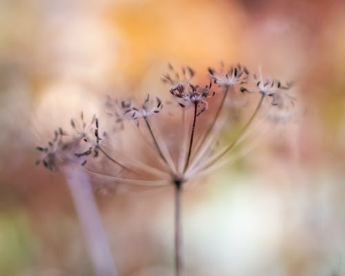 Free stock photo of bokeh, colorful, flower, still-life