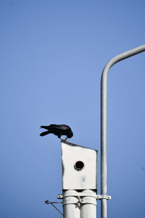Black crow sitting on metal construction