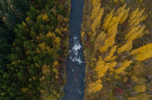 Immagine gratuita di acero, acqua, alberi gialli