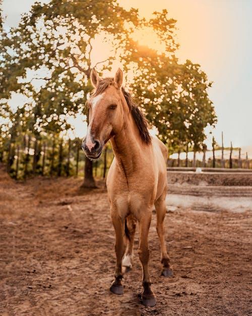 Brown Horse on Brown Soil