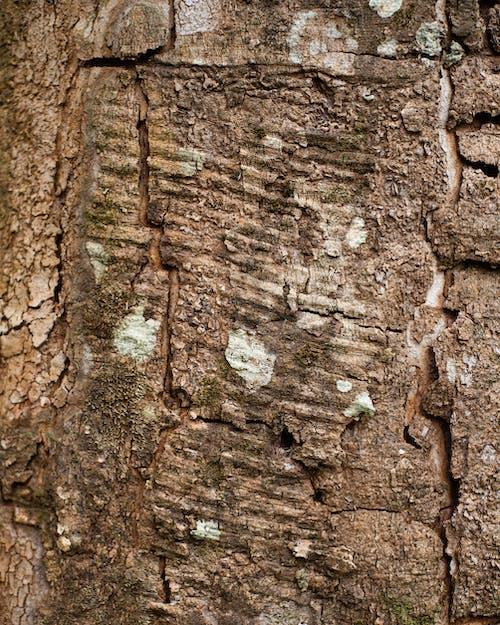 Immagine gratuita di abbaiare, albero, astratto
