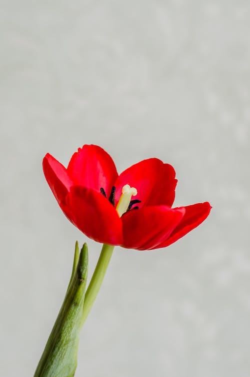 คลังภาพถ่ายฟรี ของ กลีบดอกไม้, ความรัก, ช่อดอกไม้