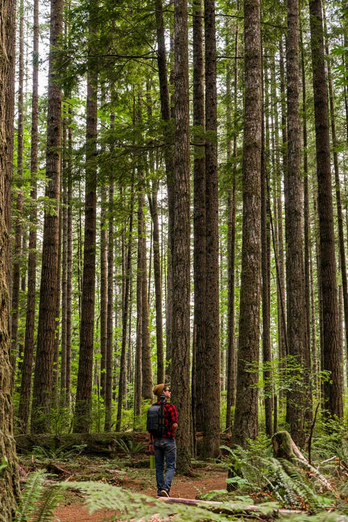 Person in Red Jacket Walking on Forest