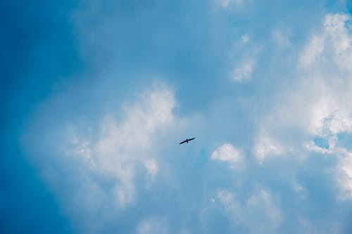 Free stock photo of atmospheric, atmospheric evening, bird, blue sky
