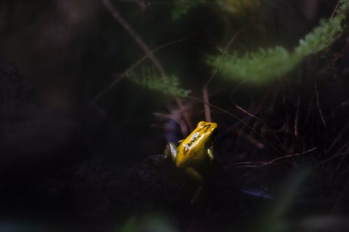 Yellow and Green Frog on Leaf