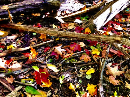 Free stock photo of autumn leaves, colors of autumn, fall leaves