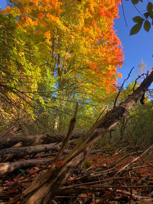 Free stock photo of autumn, autumn colors, autumn mood