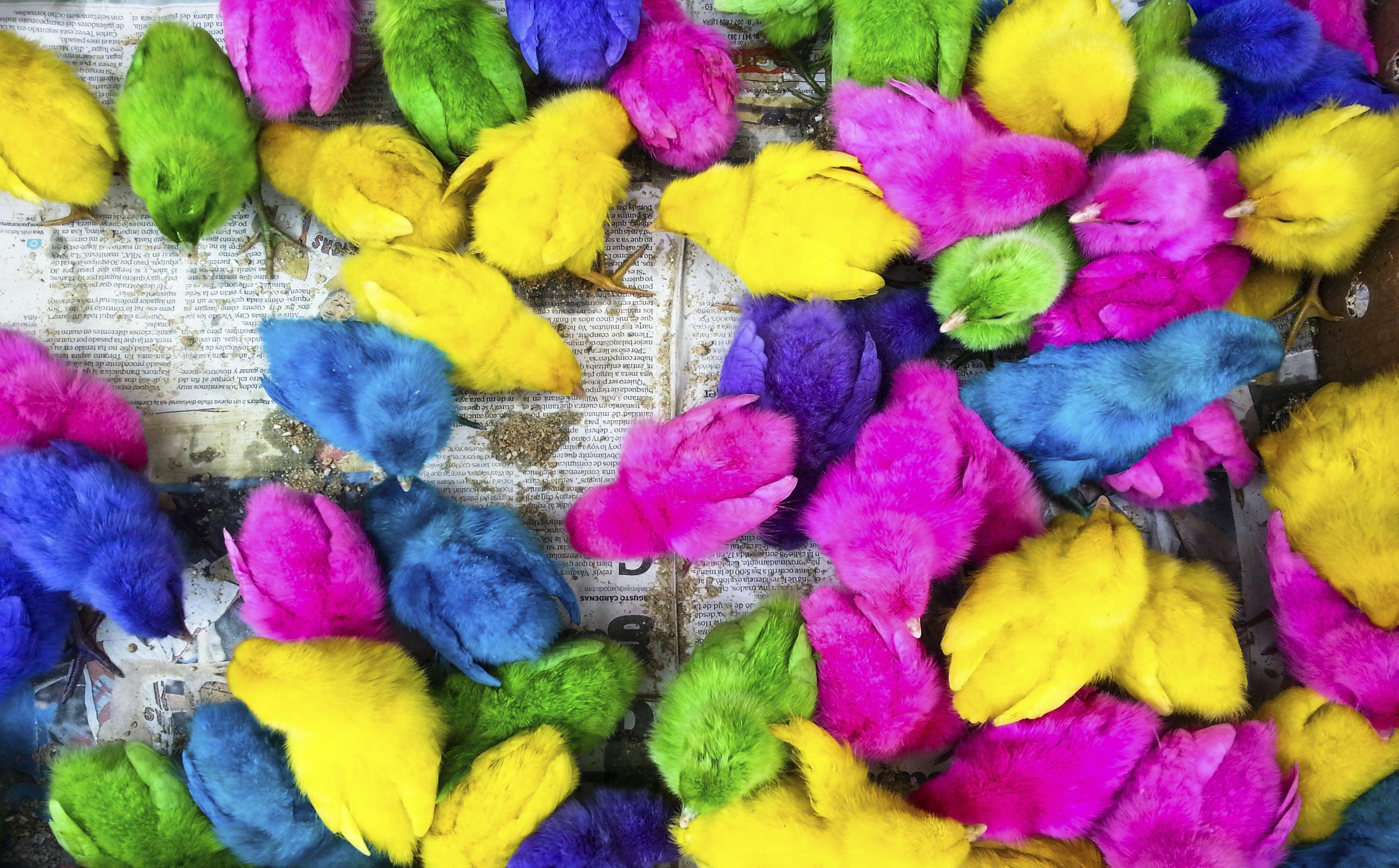 Free stock photo of blue, purple, yellow, cute