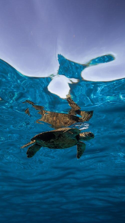Aquatic turtle swimming underwater in ocean
