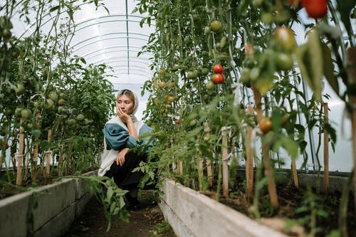 Woman Looking At Tomato Plants