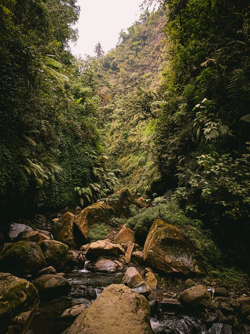 Clear creek flowing through rocks in green forest