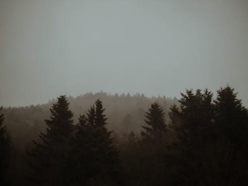 Δωρεάν στοκ φωτογραφιών με απόγευμα, αυγή, αχλή, δέντρο
